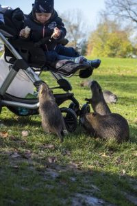Child interacting with a muskrat