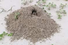 Gopher Mound